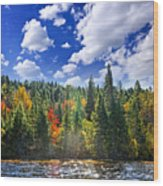 Fall Forest In Sunshine Wood Print