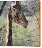 Fall Giraffe I Wood Print
