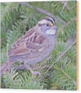 Fall Sparrow Wood Print