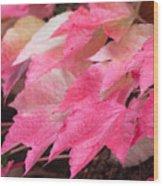 Fall Virginia Creeper Wood Print
