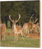 Fallow Deer Wood Print