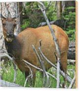 Female Elk Yellowstone Wood Print