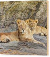 Female Lion And Cub Hdr Wood Print