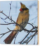 Female Northern Cardinal Wood Print