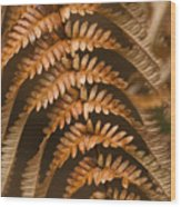 Fern Abstract Wood Print