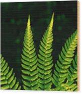 Fern Close-up Nature Patterns Wood Print