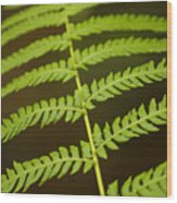 Fern Pattern Wood Print