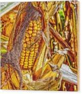 Field Corn Ready For Harvest Wood Print