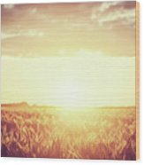 Field, Countryside At Sunset. Harvest Time. Vintage Wood Print