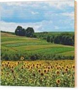 Field Of Flowers  Wood Print