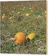 Field Of Pumpkins Wood Print