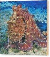 Fiji, Day Octopus Wood Print