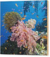 Fiji Underwater Wood Print by Dave Fleetham - Printscapes
