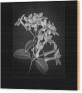 Fine Art Framed Study Of Estephanotis- Wood Print