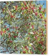 Firethorn Tree Wood Print