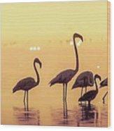 Flamingo During Sunset Wood Print