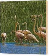 Flamingo Family Wood Print