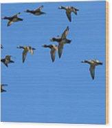 Flock Of Redhead Ducks In Flight Wood Print