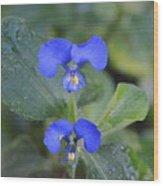 Flor Silvestre Wood Print