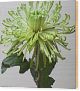 Floral Still Life Wood Print