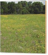 Florida - Wildflowers Wood Print