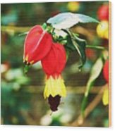 Flowering Plant Wood Print