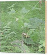Fluffy Ferns Wood Print