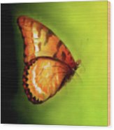 Flying Butterfly On Decorative Background, Graphic Design. Wood Print