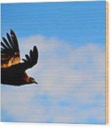 Flying Condor Wood Print