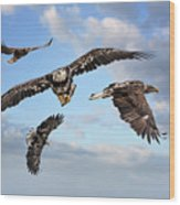 Flying Eagles Wood Print