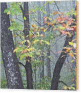 Foggy Fall Forest Wood Print