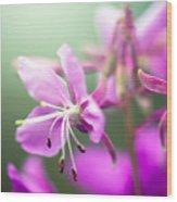 Forest Flower Wood Print by Adnan Bhatti