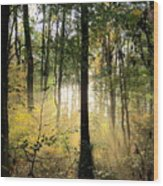 Forest Light  Wood Print
