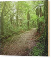 Forest Walking Trail 1 Wood Print