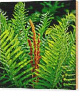 Fern Fractals In Nature Wood Print