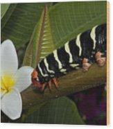 Frangipani Tree And Caterpillar Wood Print