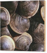 Fresh Clams Wood Print