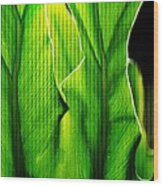 Fresh Green Leaves Wood Print