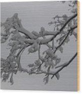 Fresh Snow On Magnolia Tree Wood Print