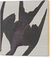 Frigate Pelican Wood Print
