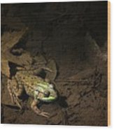 Frog 4 Wood Print