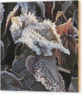 Frost-lined Wood Print
