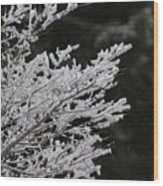 Frozen Branches Wood Print