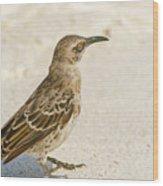 Galapagos Hood Mockingbird Wood Print