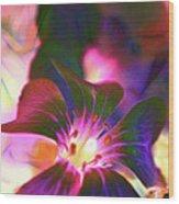 Garden Glow Wood Print
