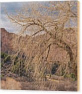 Garden Of The Gods Entrance Wood Print