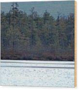 Geese On Labrador Pond Wood Print