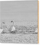 Geese Surrounded By Hoarfrost Wood Print