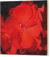 Geranium Wood Print
