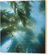 Giant Kelp Forest Wood Print